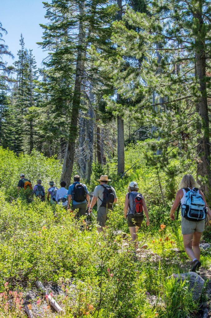 the long train of hikers