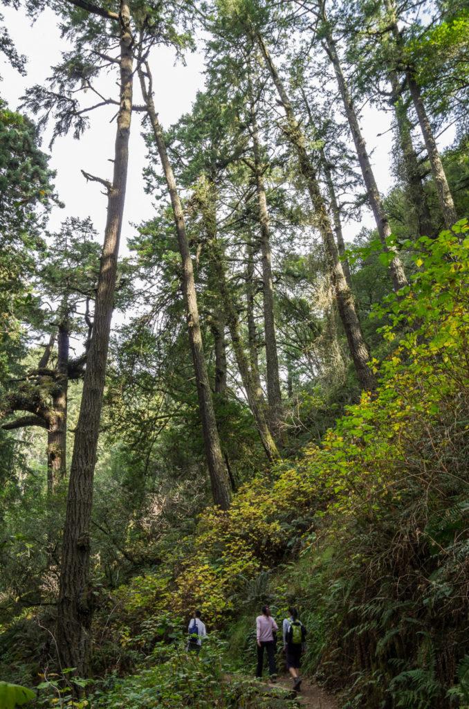 under tall trees