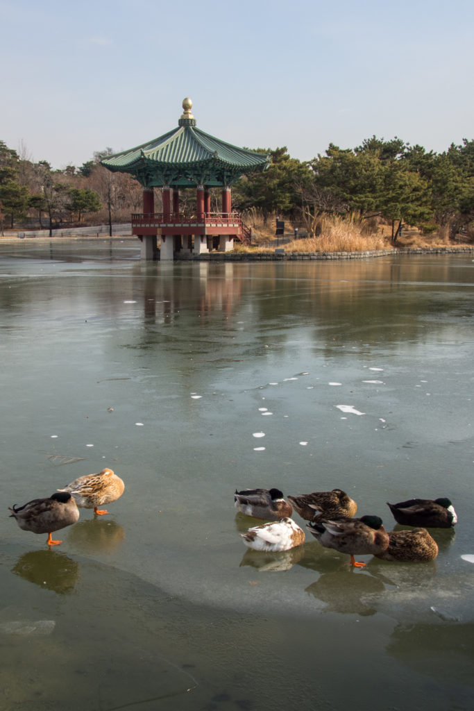 frozen pond. these ducks look like they're pretty cold.